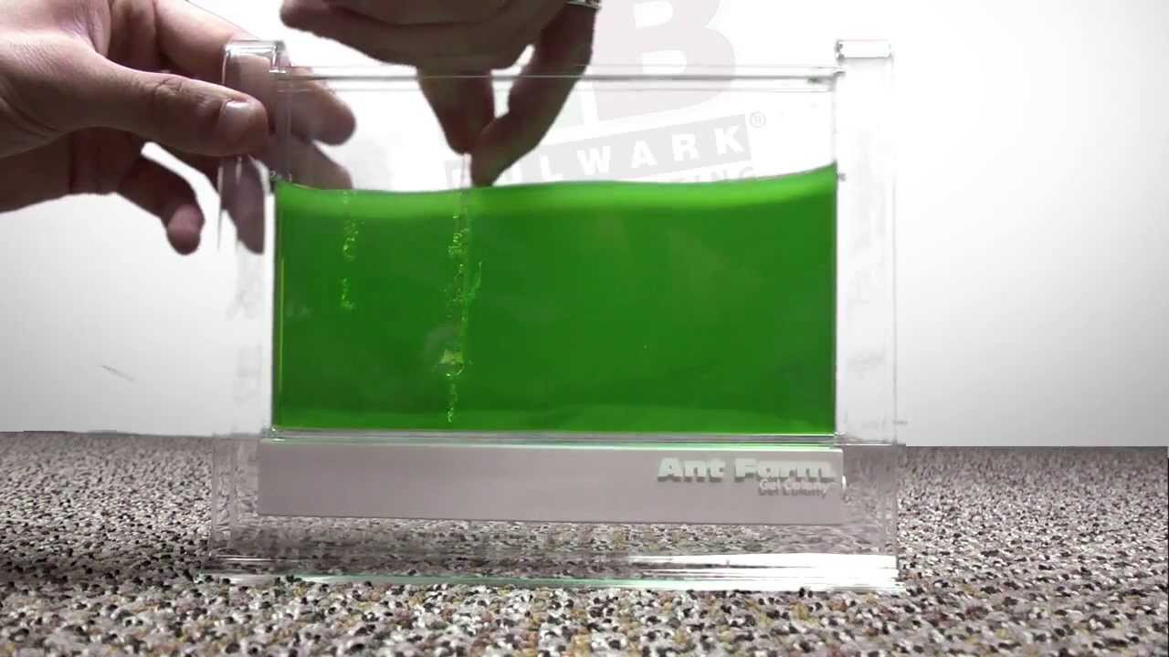 ant farm gel colony instructions